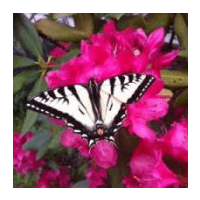 Image for Slideshow